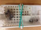 Fotogalerie včely, foto č. 3
