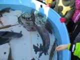 Fotogalerie 2020-Vánoční ryba, foto č. 17